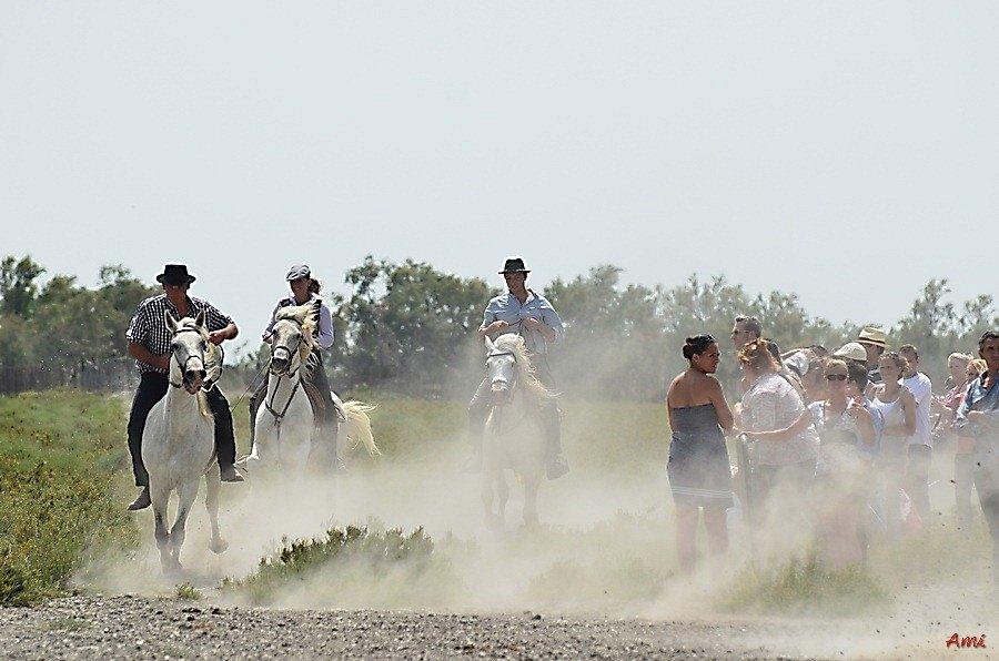 Course de satin 2012