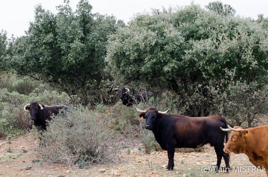 Concha y Sierra