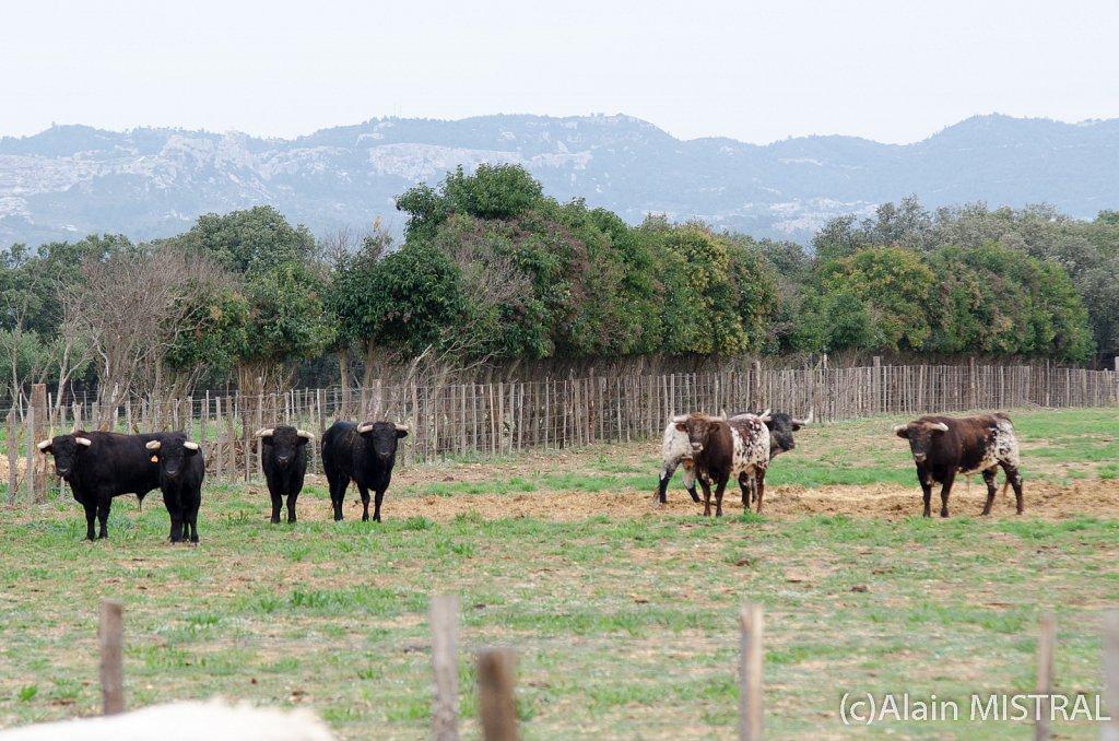 Valverde-7881.jpg